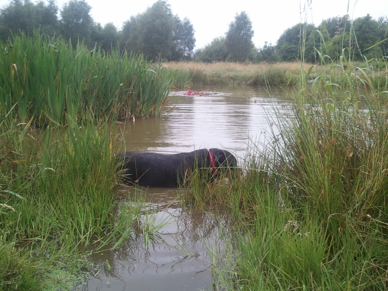 Lou paddling in the rain