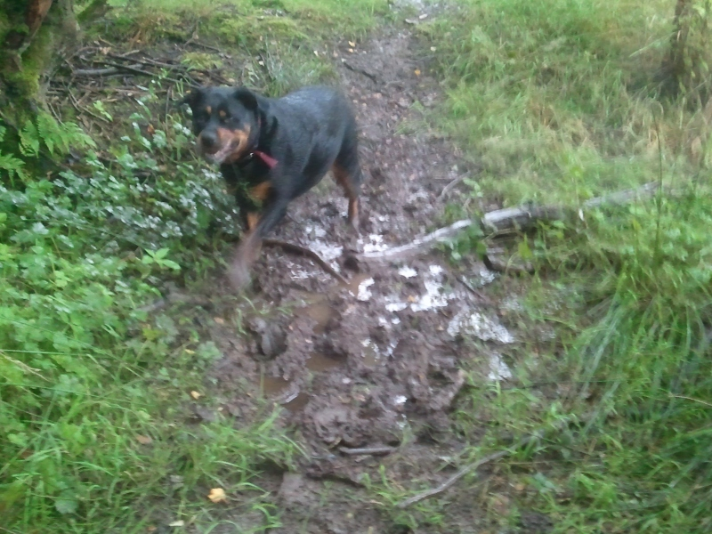 Lou finds more mud on our broken buiscuits thought shower walk