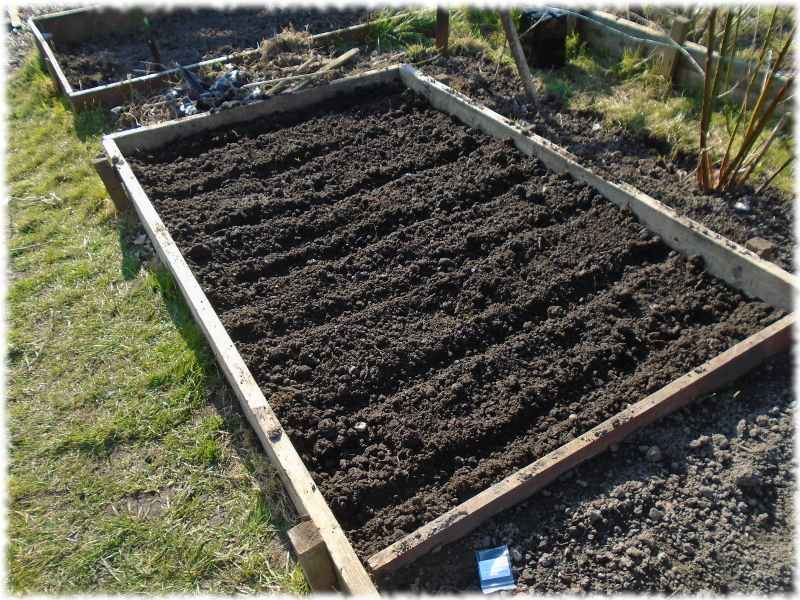 Sowing the seeds in a bedding box