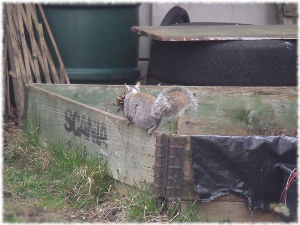 Obligitary Squirrel Visit Sorted
