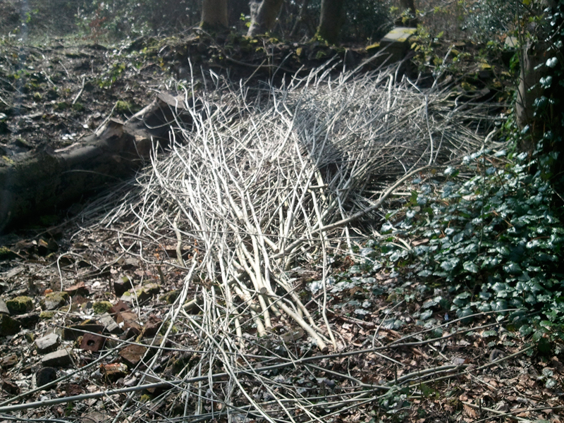 Recycled Ash Branches used for Home Grown Garden Poles.
