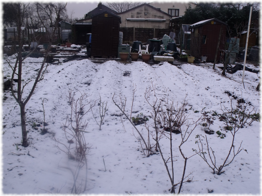 Our 2nd plot covered in white stuff