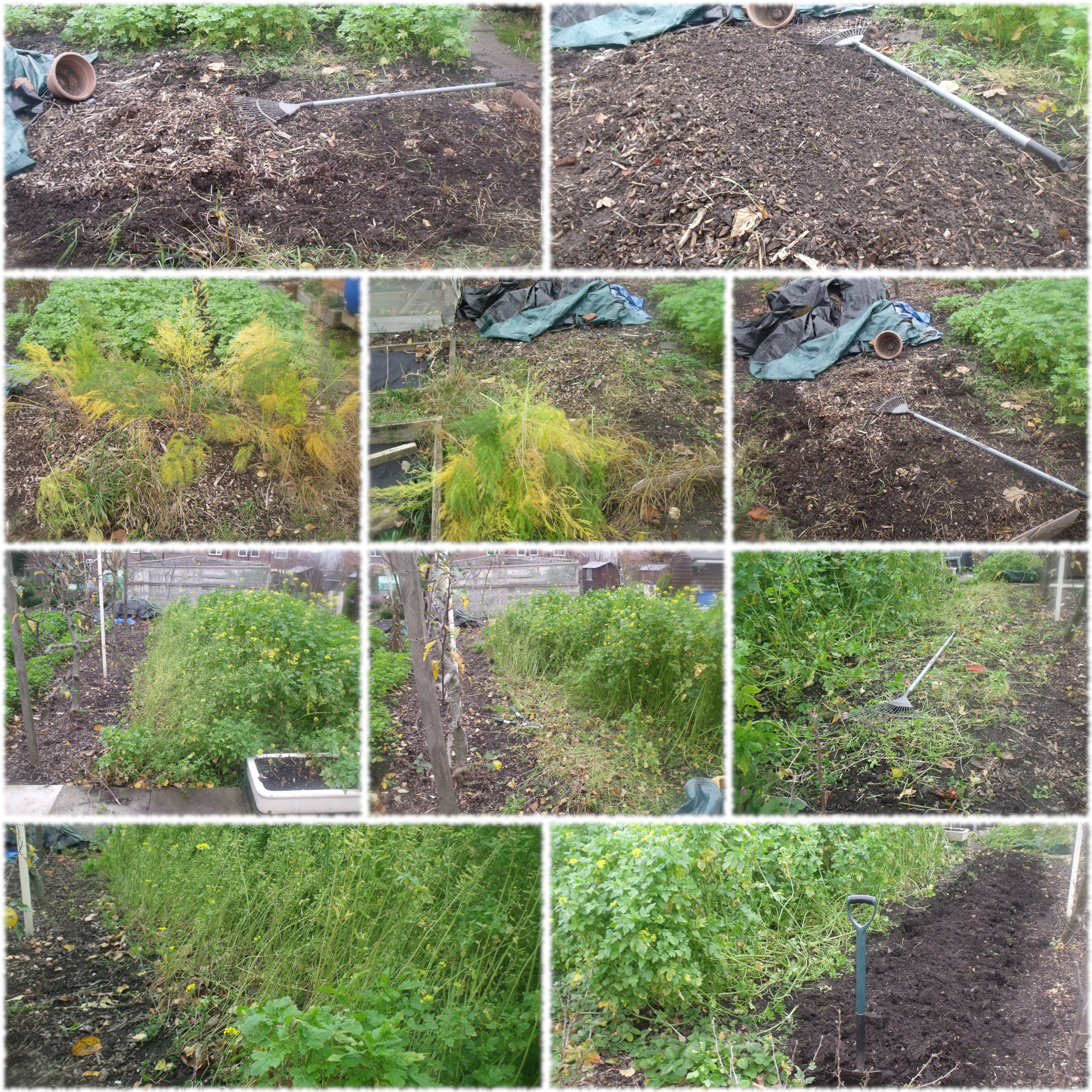 Cutting Back Green Manure and Asparagus
