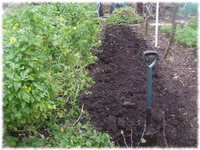 1st bed of Green Manure turned over