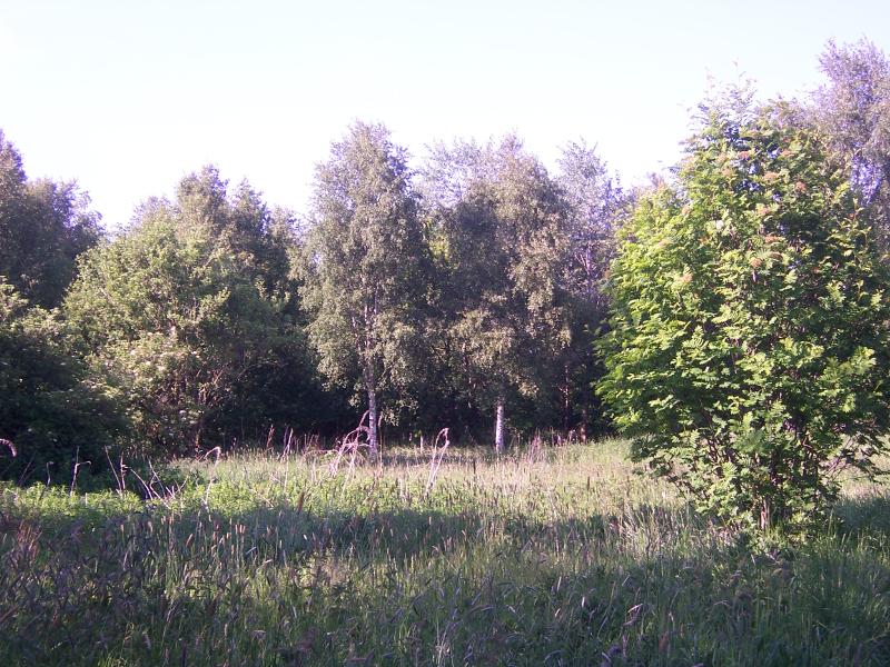Sunny Salford meadows