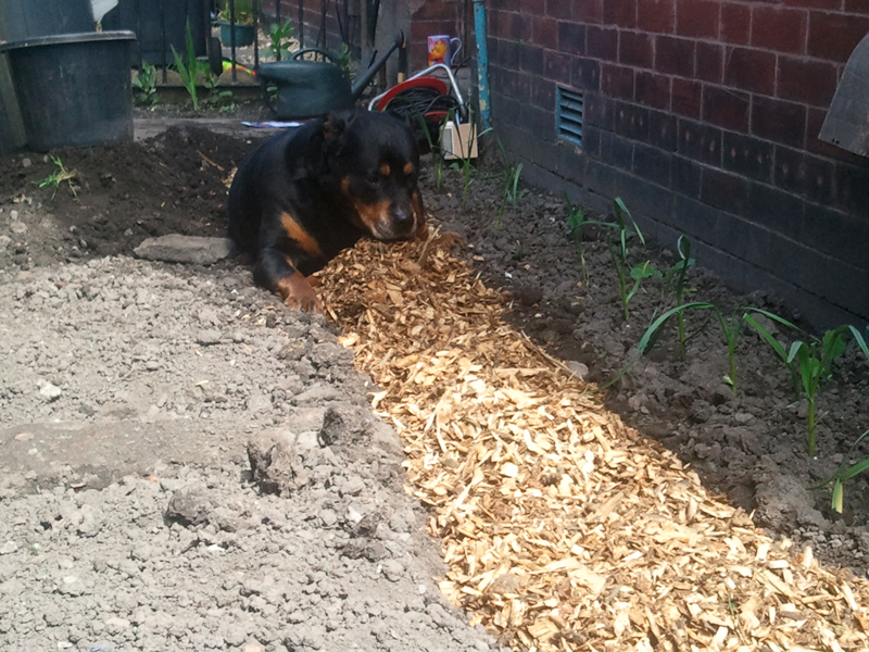 Lou Inspects the new path