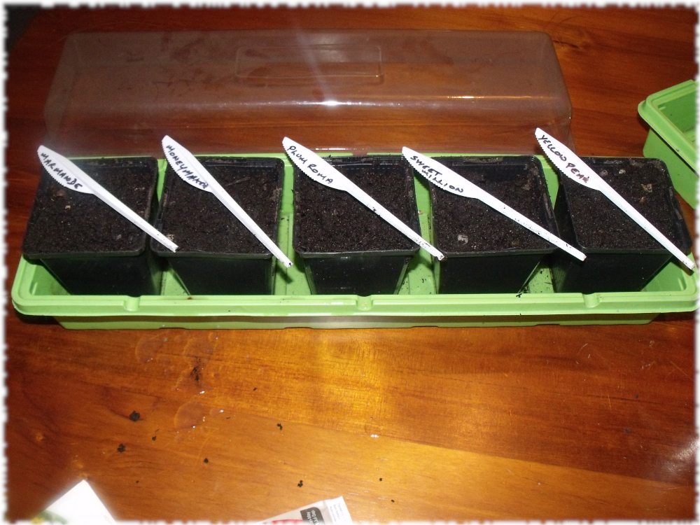 Tomatoes Sown