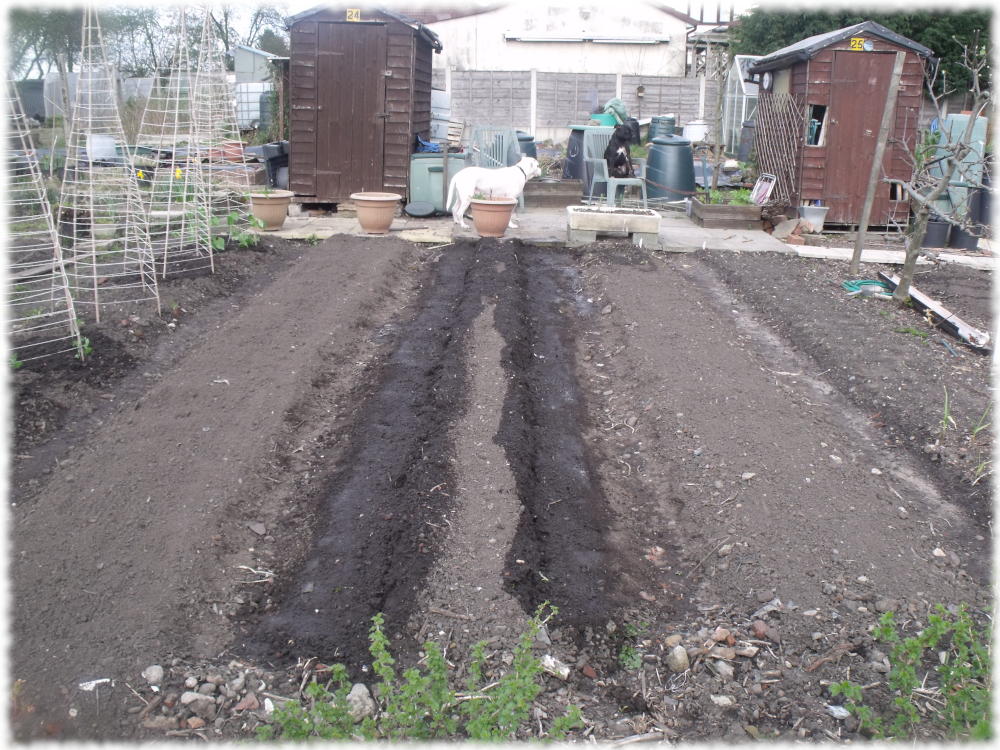 Spuds Covered and Watered
