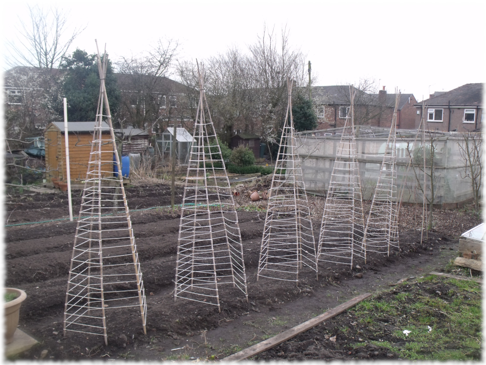 5 Of Our Wigwams Tied Up