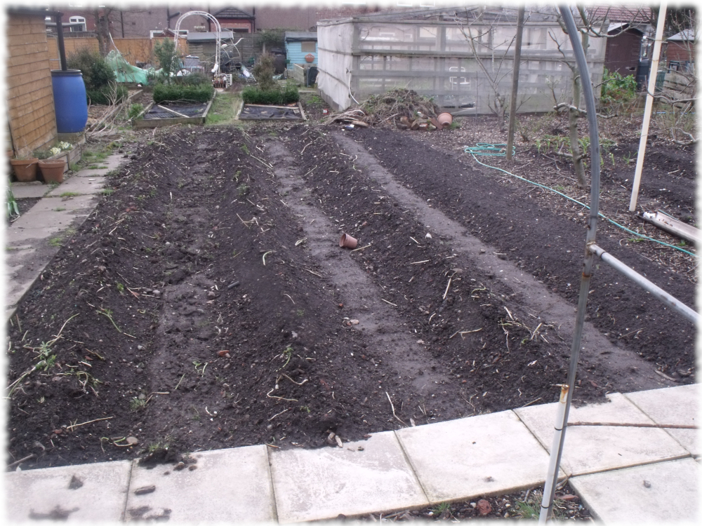 Only 3 Beds To Sort Out On our 1st Plot
