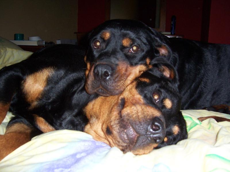 Sav & Lou