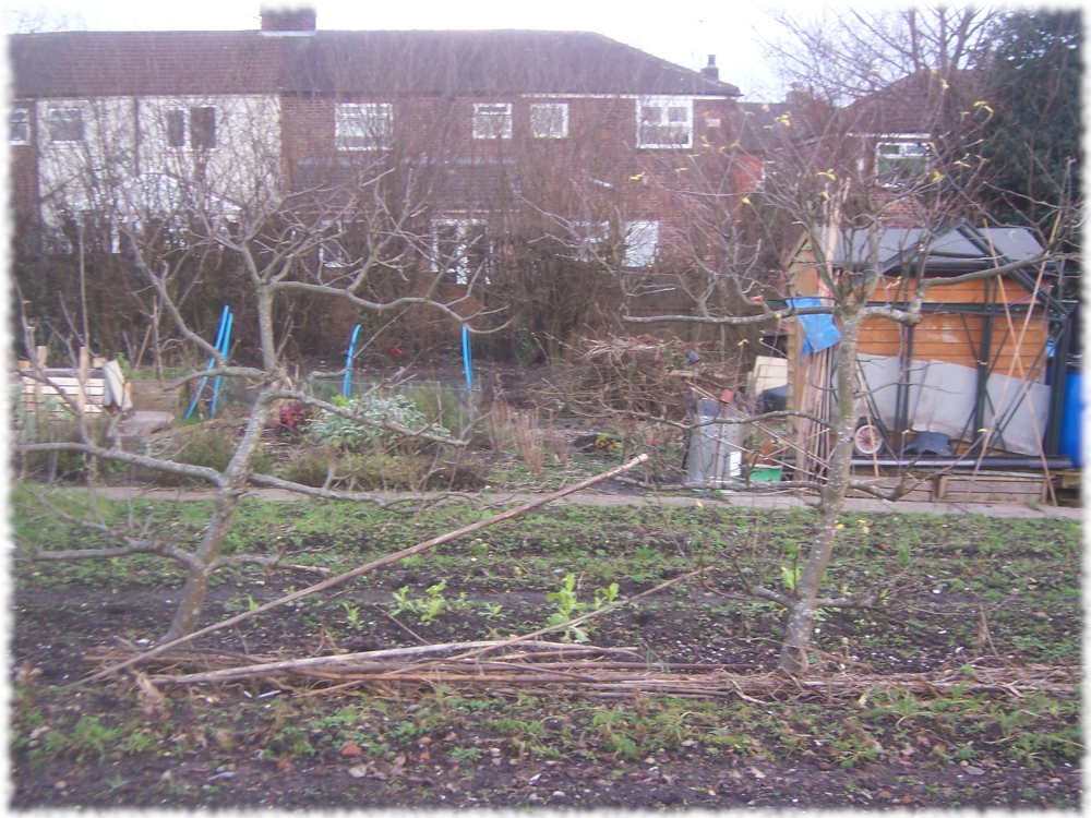 First glance at our two Apple trees between the plots