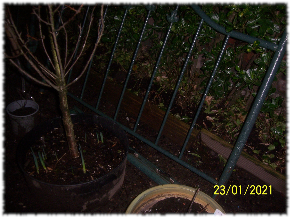 Old metal bed frame in the castle garden ready for the plot