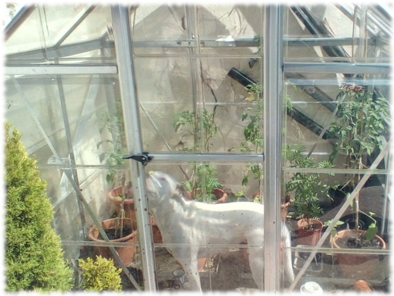 Franky Check Out Moving The Backyard Greenhouse