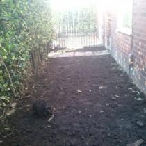 Guerrilla Podcasts Home Grown Front Garden Update