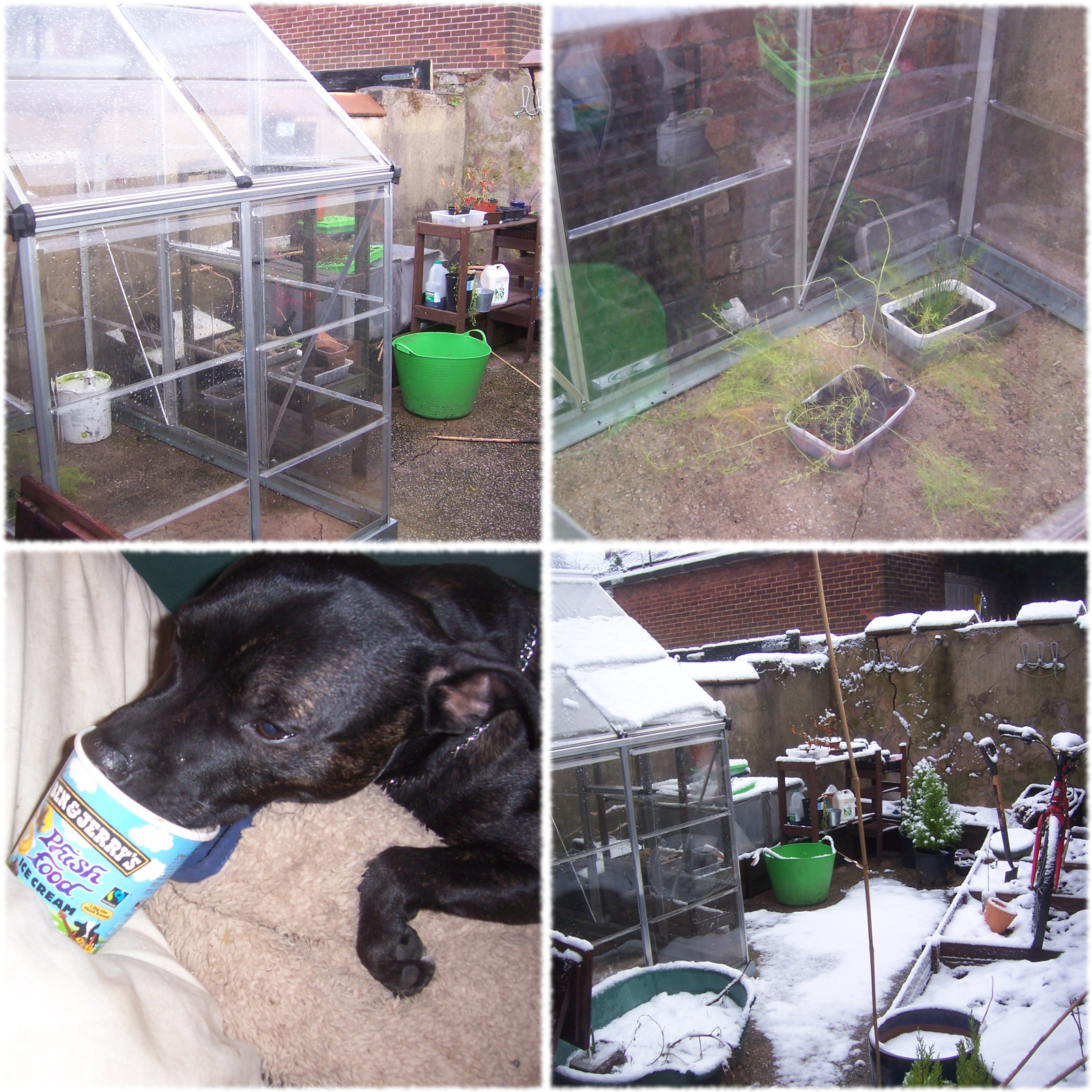 Emptying Me Greenhouse